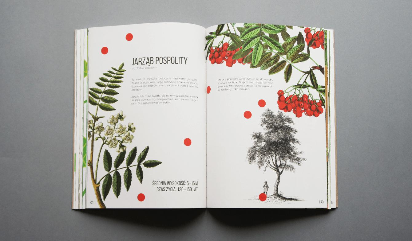 Zuzanna Malinowska_Ale drzewa10