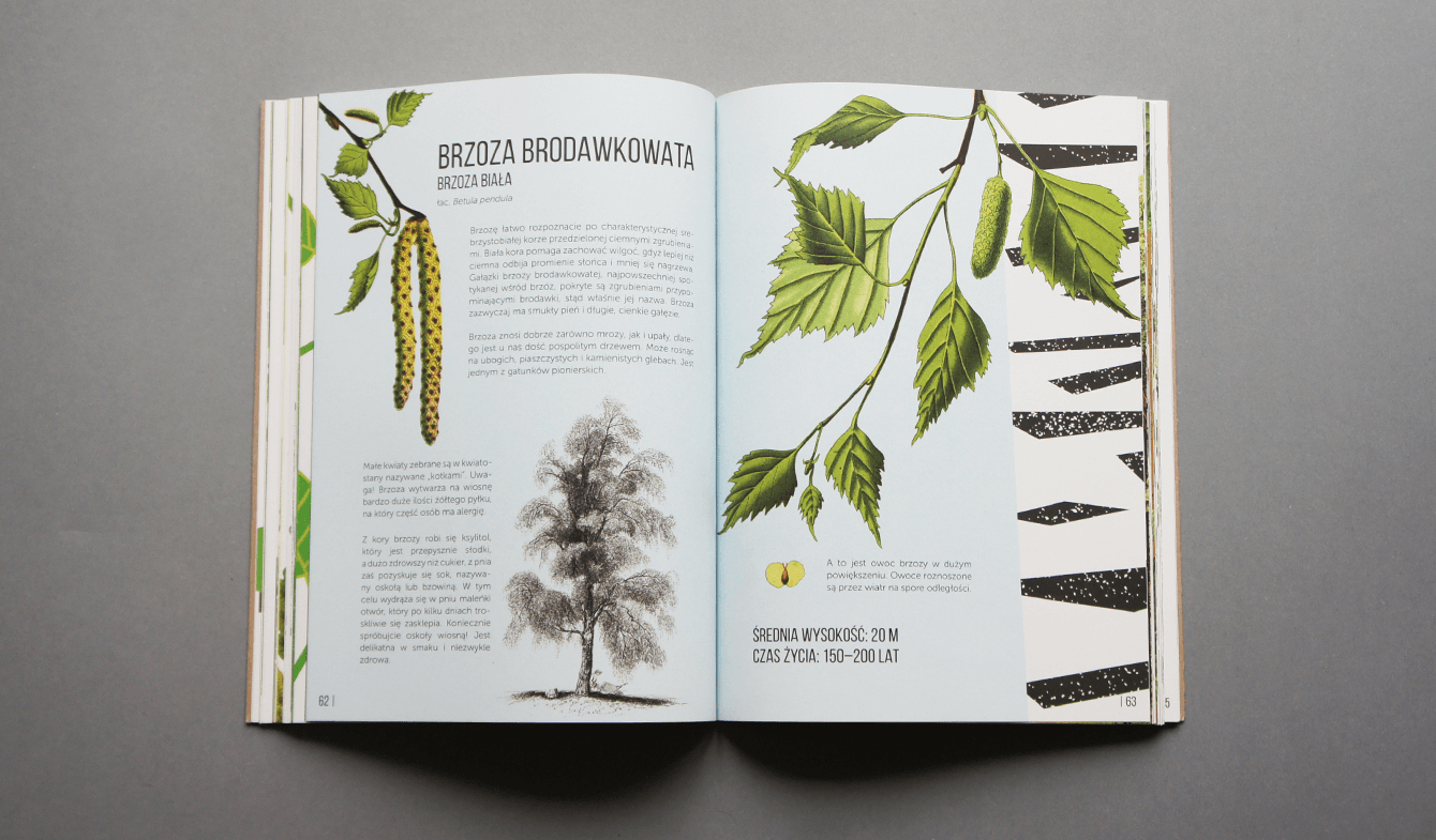 Zuzanna Malinowska_Ale drzewa8